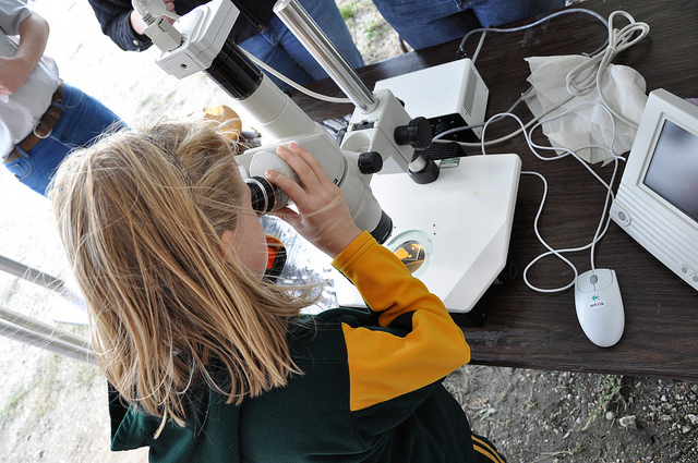A young girl looks through a microscope at North Dakota State University. Today, the scientific workforce, including academia, industry and the government, is one-third women, according to the National Science Foundation. [Image credit: Flickr user David Haasser]