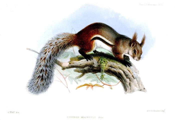 Wikimedia Commons/Joseph Wolf