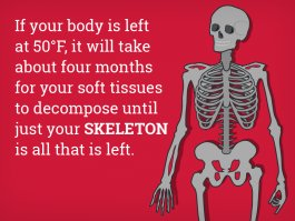 heres-what-happens-to-your-body-after-you-die